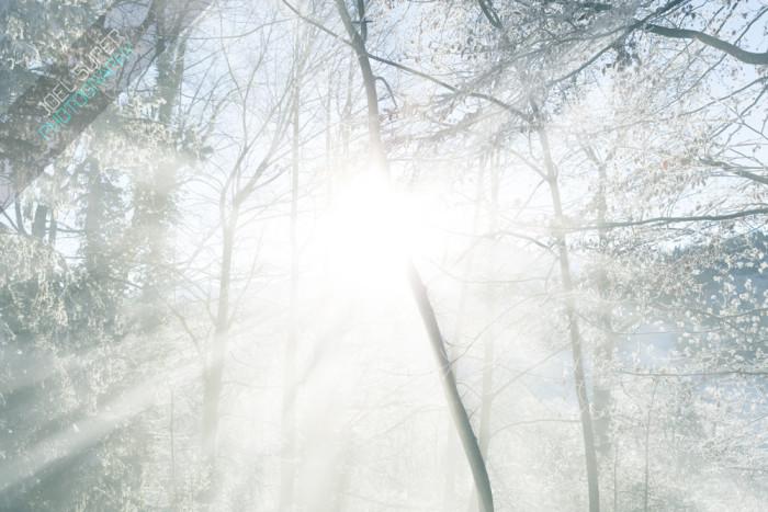 Winter Wonderland by Joël Super